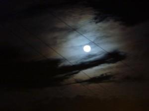 Moon tree compress 2