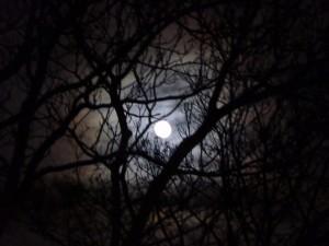 Moon tree compress 3