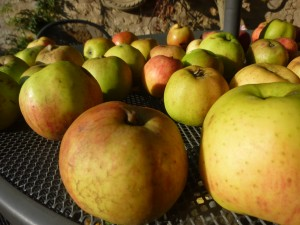 Many apples compress