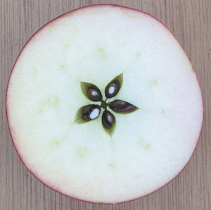 apple-star[1]
