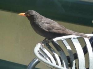 NZbirdcompress