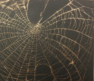 Spider web crop