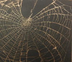 Spider web crop